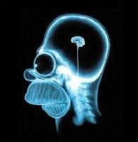 Idée cadeau pour Noël : acheter un cerveau