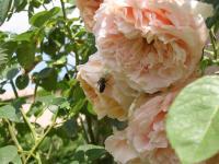 Quelques photos du jardin de Tournefeuille