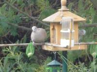 Oiseaux du jardin de Tournefeuille